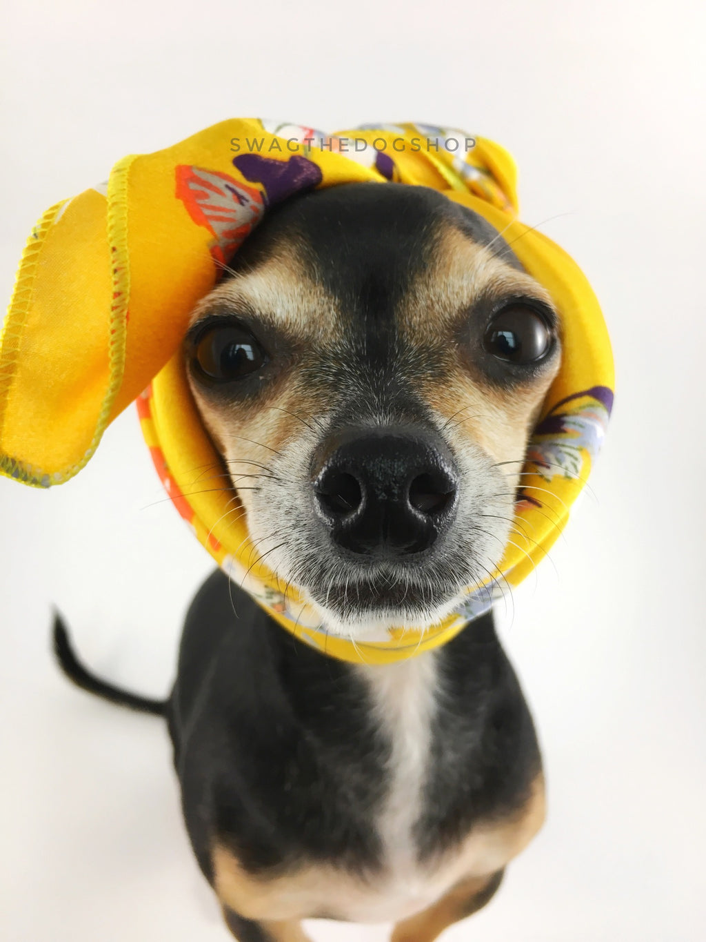 Yellow Wild Flower Swagdana Scarf - Bust of Cute Chihuahua Wearing Swagdana Scarf as Headband. Dog Bandana. Dog Scarf.