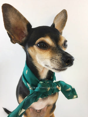 Lorenzo Llama Green Swagdana Scarf - Bust of Cute Chihuahua Wearing Swagdana Scarf as Neck Scarf. Dog Bandana. Dog Scarf.