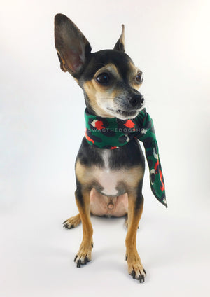 Fierce Forest Green with Red Swagdana Scarf - Full Frontal View of Cute Chihuahua Wearing Swagdana Scarf as Neckerchief. Dog Bandana. Dog Scarf