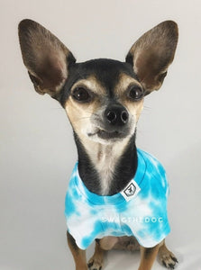 Swagadelic Sky Blue Tie Dye Tee - Close-up frontal of cute Chihuahua named Hugo in sitting position, wearing the hand tie-dyed tee with Sky Blue