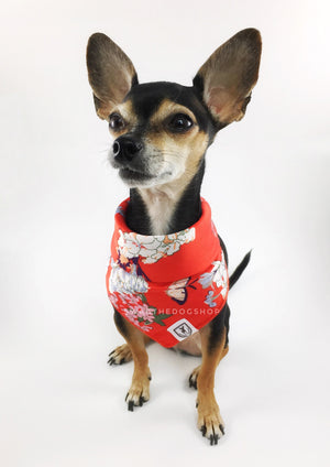 Red Wild Flowers Swagdana Scarf - Bust of Cute Chihuahua Wearing Swagdana Scarf as Bandana. Dog Bandana. Dog Scarf.