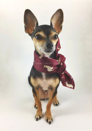Lorenzo Llama Burgundy Swagdana Scarf - Full Front View of Cute Chihuahua Wearing Swagdana Scarf as Neckerchief. Dog Bandana. Dog Scarf.