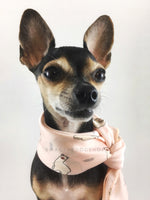 Lorenzo Llama Soft Pink Swagdana Scarf - Bust of Cute Chihuahua Wearing Swagdana Scarf as Neckerchief. Dog Bandana. Dog Scarf.