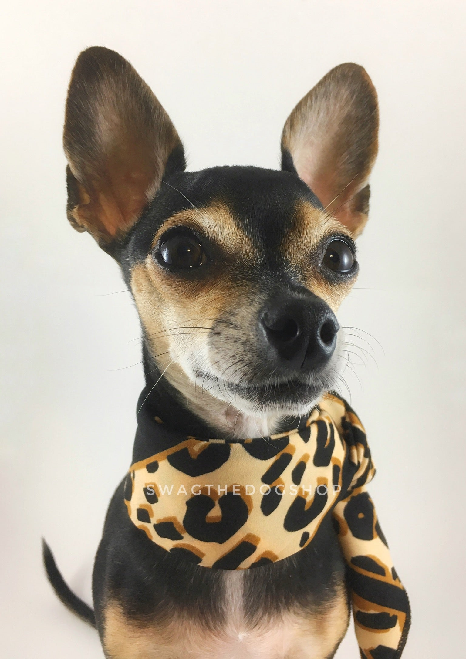 Leopard Ivory Cream Swagdana Scarf - Bust of Cute Chihuahua Wearing Swagdana Scarf as Neckerchief. Dog Bandana. Dog Scarf.