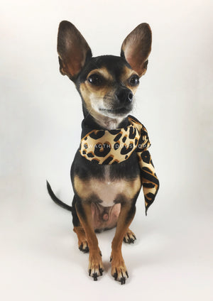 Leopard Ivory Cream Swagdana Scarf - Full Front View of Cute Chihuahua Wearing Swagdana Scarf as Neckerchief. Dog Bandana. Dog Scarf.