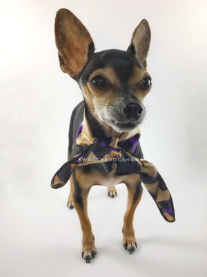 Fierce Beige with Purple Swagdana Scarf - Full Frontal View of Cute Chihuahua Wearing Swagdana Scarf as Neck Scarf. Dog Bandana. Dog Scarf