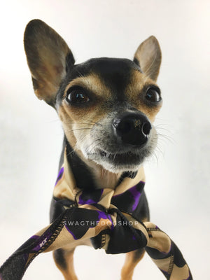 Fierce Beige with Purple Swagdana Scarf - Bust of Cute Chihuahua Wearing Swagdana Scarf as Neck Scarf. Dog Bandana. Dog Scarf