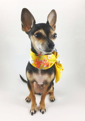Yellow Wild Flower Swagdana Scarf - Full Front View of Cute Chihuahua Wearing Swagdana Scarf as Neckerchief. Dog Bandana. Dog Scarf.