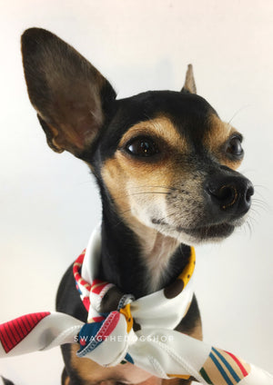 Rock Your Socks Swagdana Scarf - Bust of Cute Chihuahua Wearing Swagdana Scarf as Neck Scarf. Dog Bandana. Dog Scarf.