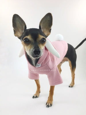 Pink Bunny Hoodie - Side View of Cute Chihuahua Dog Wearing Hoodie. Pink Bunny Hoodie with Pom Pom Tail