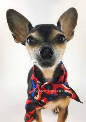 Fierce Vibrant Red with Blue Swagdana Scarf - Bust of Cute Chihuahua Wearing Swagdana Scarf as Neck Scarf. Dog Bandana. Dog Scarf