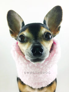 Full of Heart Swagsnood - Close-up view of Hugo's face, Cute Chihuahua Dog Wearing pink sherpa side