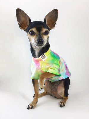 Swagadelic Hipster Tie Dye Tee - Frontal of cute Chihuahua named Hugo in sitting position with his one paw up, wearing the hand tie-dyed tee with Pink, Yellow and Sky Blue