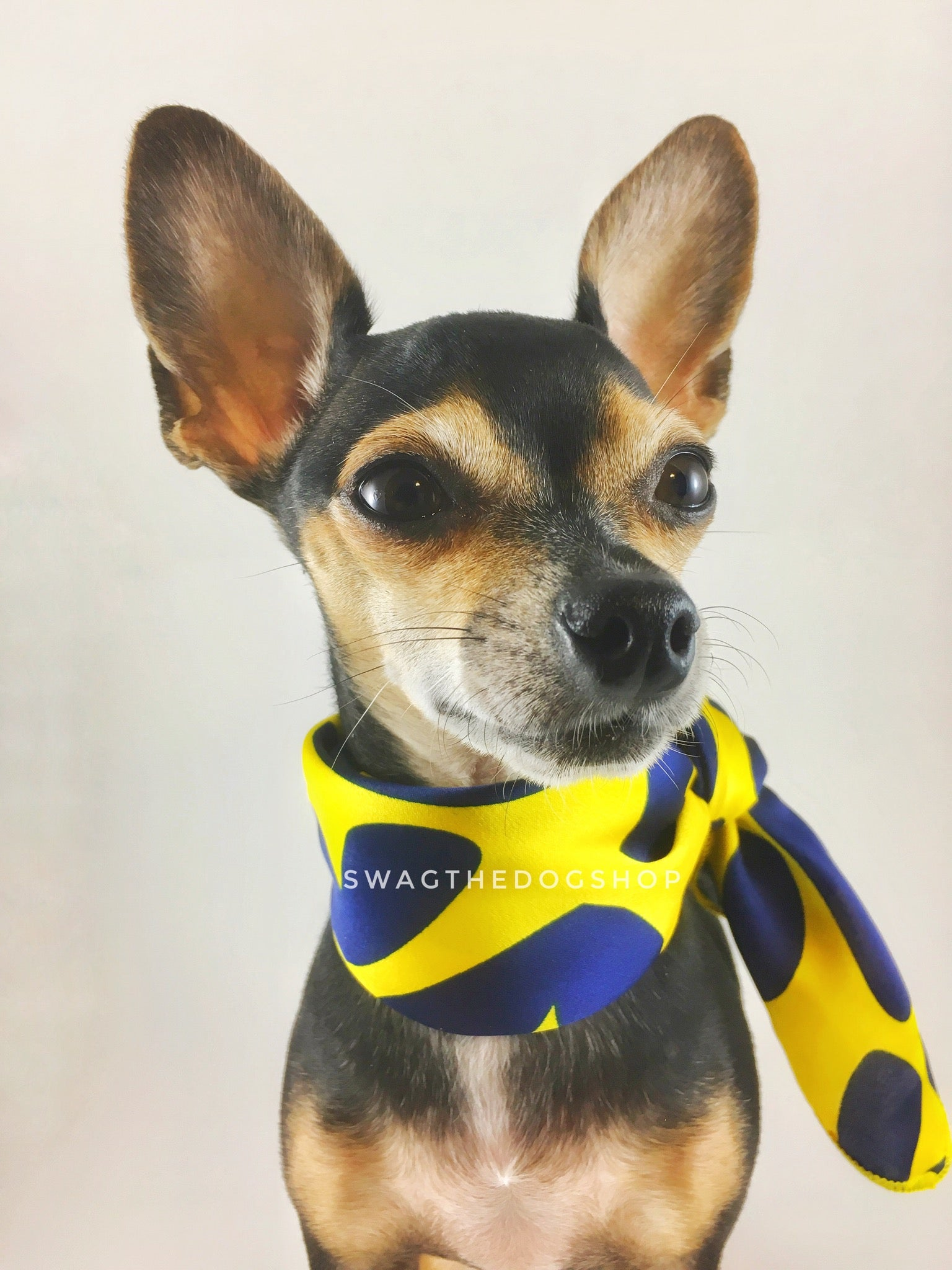 Full of Heart Yellow Swagdana Scarf - Bust of Cute Chihuahua Wearing Swagdana Scarf as Neckerchief. Dog Bandana. Dog Scarf.