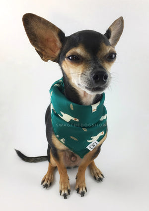 Lorenzo Llama Green Swagdana Scarf - Full Front View of Cute Chihuahua Wearing Swagdana Scarf as Bandana. Dog Bandana. Dog Scarf.