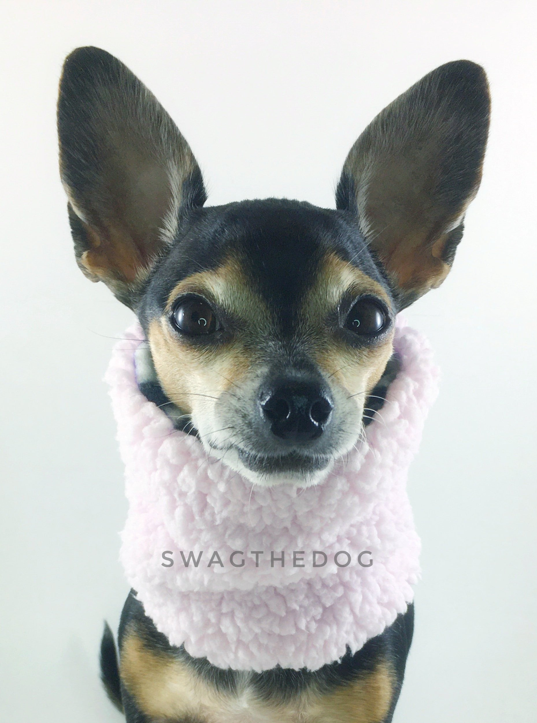 Gray Snow Leopard Swagsnood - Full Front View of Hugo, Cute Chihuahua dog sitting wearing pink sherpa side