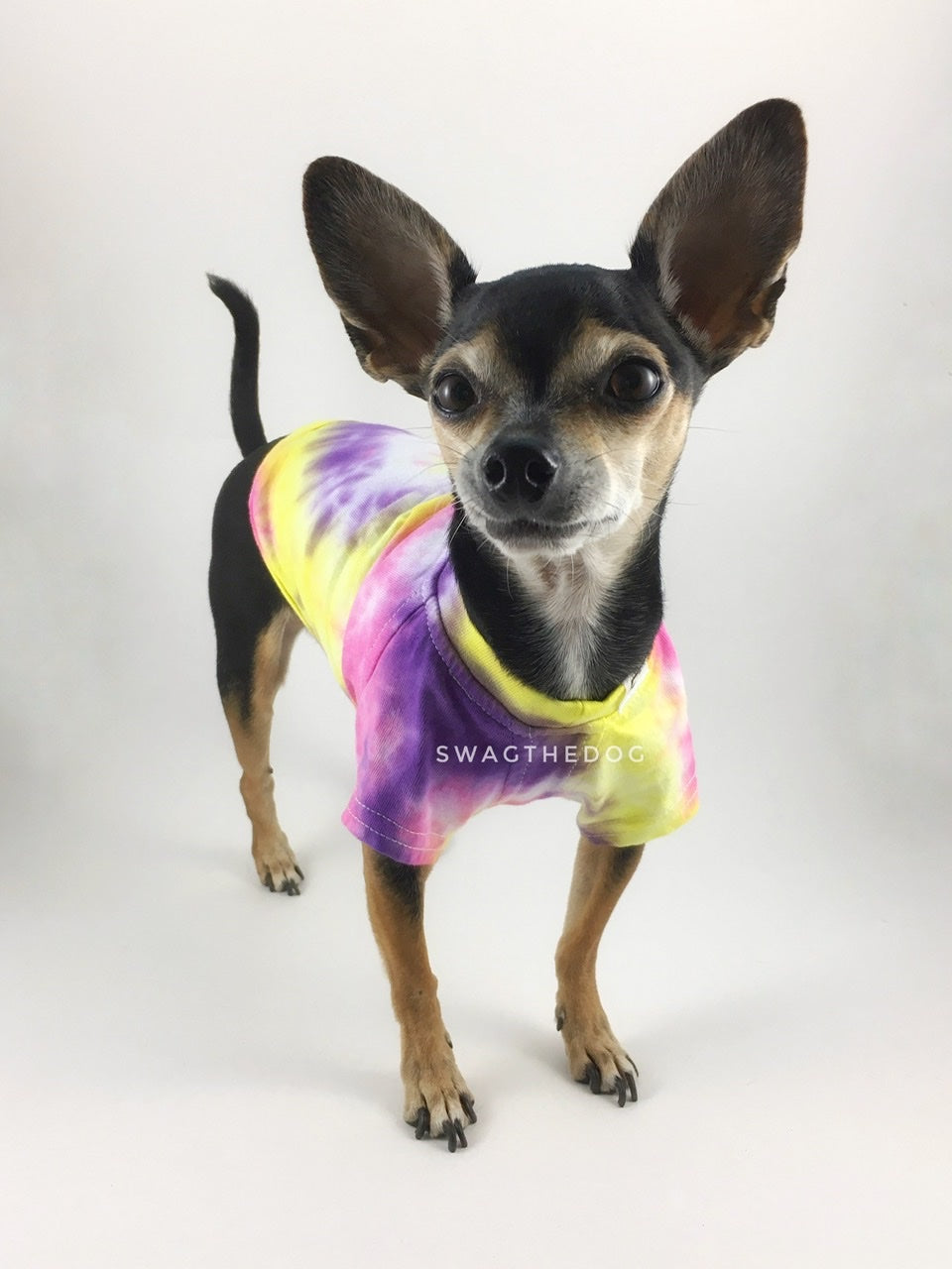Swagadelic Spiral Tie Dye Tee - Frontal of cute Chihuahua named Hugo in standing position, wearing the hand tie-dyed tee with Pink, Yellow and Purple