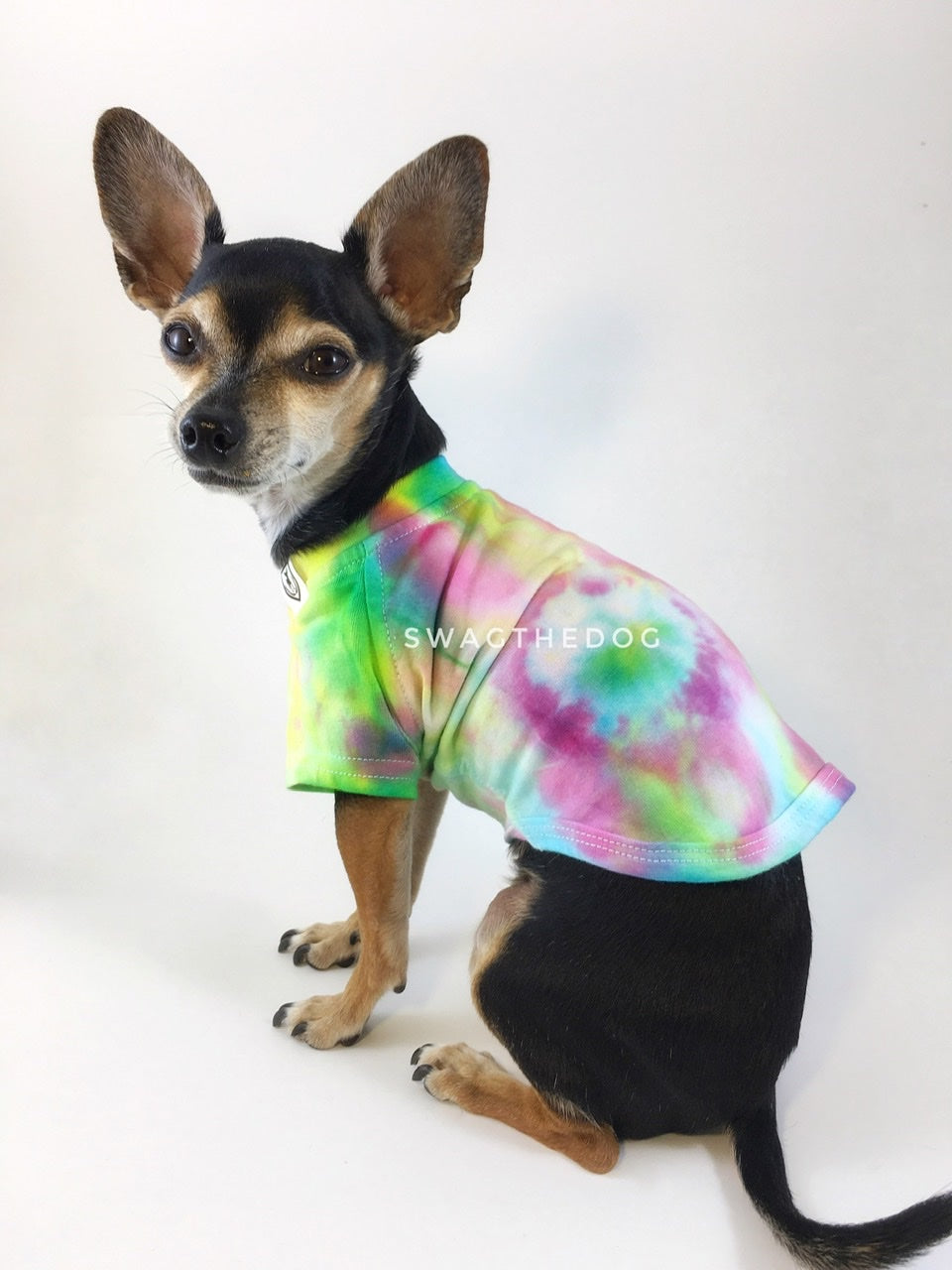 Swagadelic Hipster Tie Dye Tee - Cute Chihuahua named Hugo in sitting position with his back towards the camera and looking back, wearing the hand tie-dyed tee with Pink, Yellow and Sky Blue