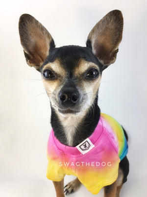 Swagadelic Pride Ombré Tie Dye Tee - Close-up frontal of cute Chihuahua named Hugo in sitting position, wearing the hand tie-dyed tee with Pink, Yellow, Green, Sky Blue and Purple