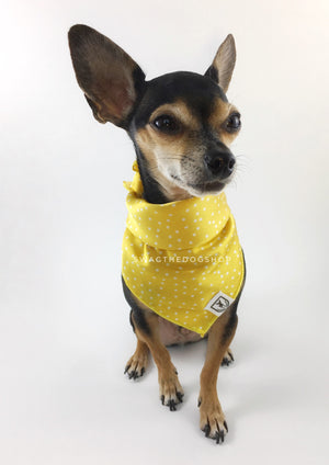 Polka Itty Bitty Sunny Yellow Swagdana Scarf - Full Frontal View of Cute Chihuahua Wearing Swagdana Scarf as Bandana. Dog Bandana. Dog Scarf.