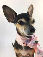 Pink Wild Flower Swagdana Scarf - Bust of Cute Chihuahua Wearing Swagdana Scarf as Neckerchief. Dog Bandana. Dog Scarf.