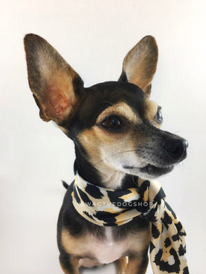 Fierce Beige with Yellow Swagdana Scarf - Bust of Cute Chihuahua Wearing Swagdana Scarf as Neckerchief. Dog Bandana. Dog Scarf