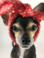 Polka Itty Bitty Coral Swagdana Scarf - Bust of Cute Chihuahua Wearing Swagdana Scarf as Headband. Dog Bandana. Dog Scarf.
