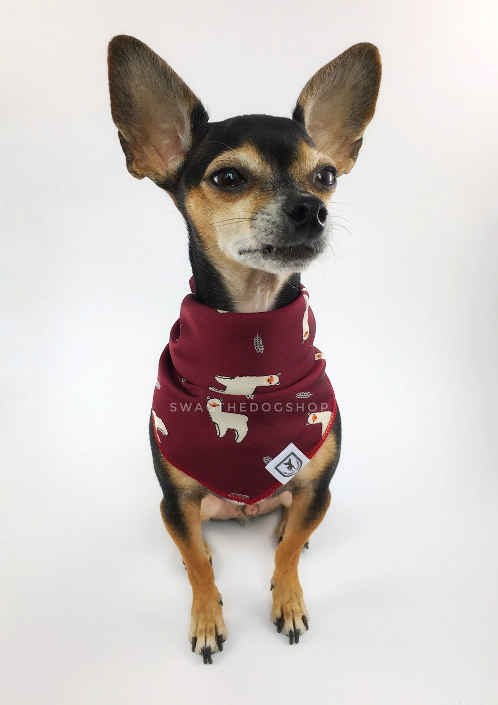 Lorenzo Llama Burgundy Swagdana Scarf - Full Front View of Cute Chihuahua Wearing Swagdana Scarf as Bandana. Dog Bandana. Dog Scarf.
