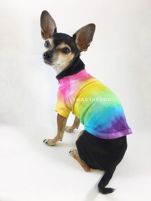 Swagadelic Pride Ombré Tie Dye Tee - Cute Chihuahua named Hugo in sitting position with his back towards the camera and looking back, wearing the hand tie-dyed tee with Pink, Yellow, Green, Sky Blue and Purple