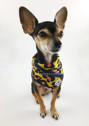 Leopard Sunflower Yellow Swagdana Scarf - Full Front View of Cute Chihuahua Wearing Swagdana Scarf as Bandana. Dog Bandana. Dog Scarf.