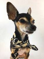 Fierce Beige with Yellow Swagdana Scarf - Bust of Cute Chihuahua Wearing Swagdana Scarf as Neckerchief Tied At The Front. Dog Bandana. Dog Scarf