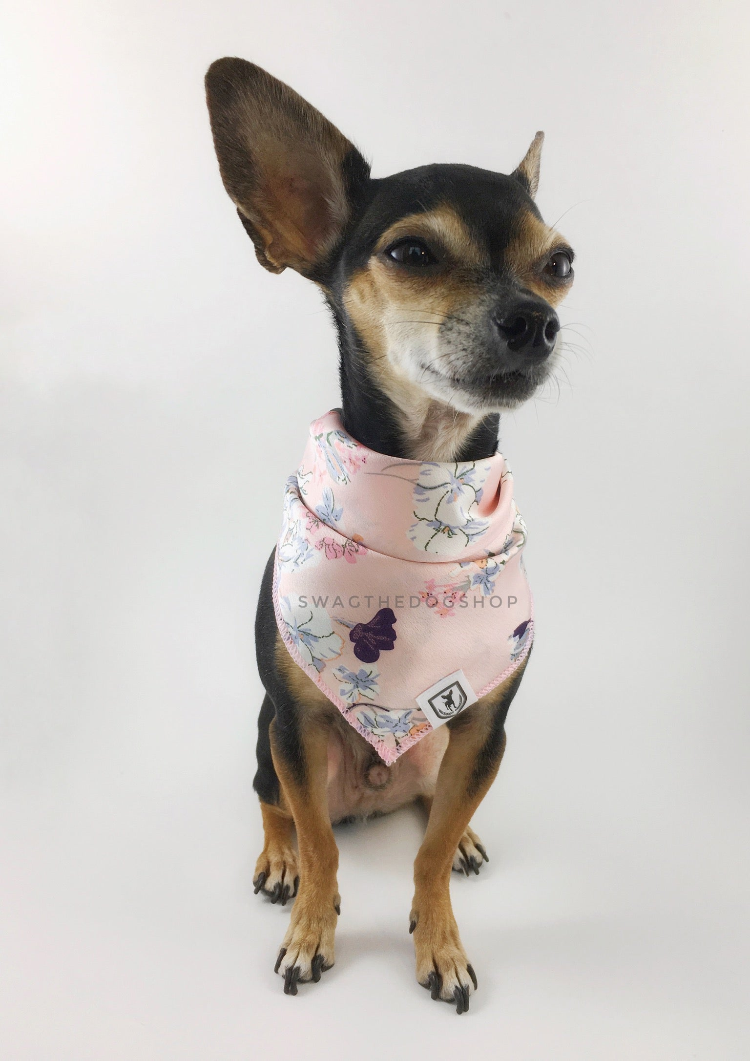 Pink Wild Flower Swagdana Scarf - Full Front View of Cute Chihuahua Wearing Swagdana Scarf as Bandana. Dog Bandana. Dog Scarf.