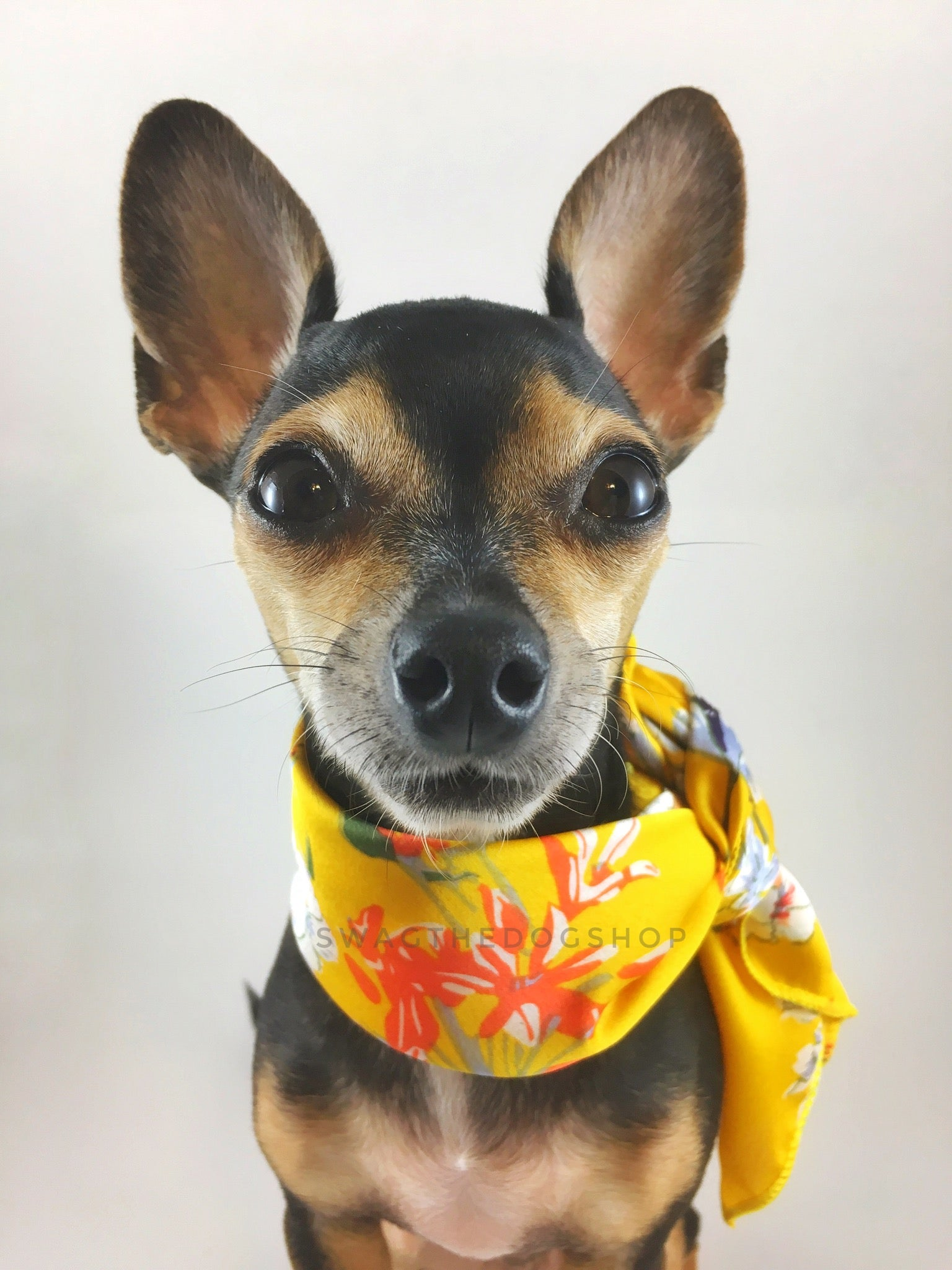 Yellow Wild Flower Swagdana Scarf - Bust of Cute Chihuahua Wearing Swagdana Scarf as Neckerchief. Dog Bandana. Dog Scarf.