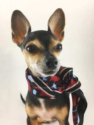 Leopard Burgundy Swagdana Scarf - Bust of Cute Chihuahua Wearing Swagdana Scarf as Neckerchief. Dog Bandana. Dog Scarf.