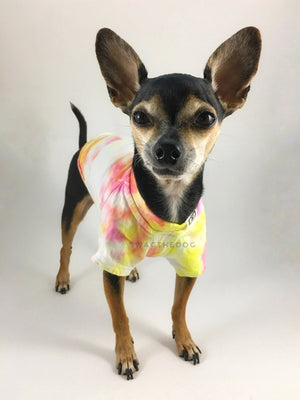 Swagadelic Cotton Candy Tie Dye Tee - Frontal of cute Chihuahua named Hugo in standing position, wearing the hand tie-dyed tee with Pink and Yellow