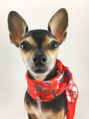 Red Wild Flowers Swagdana Scarf - Bust of Cute Chihuahua Wearing Swagdana Scarf as Neckerchief. Dog Bandana. Dog Scarf.
