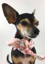 Pink Wild Flower Swagdana Scarf - Bust of Cute Chihuahua Wearing Swagdana Scarf as Neck Scarf. Dog Bandana. Dog Scarf.
