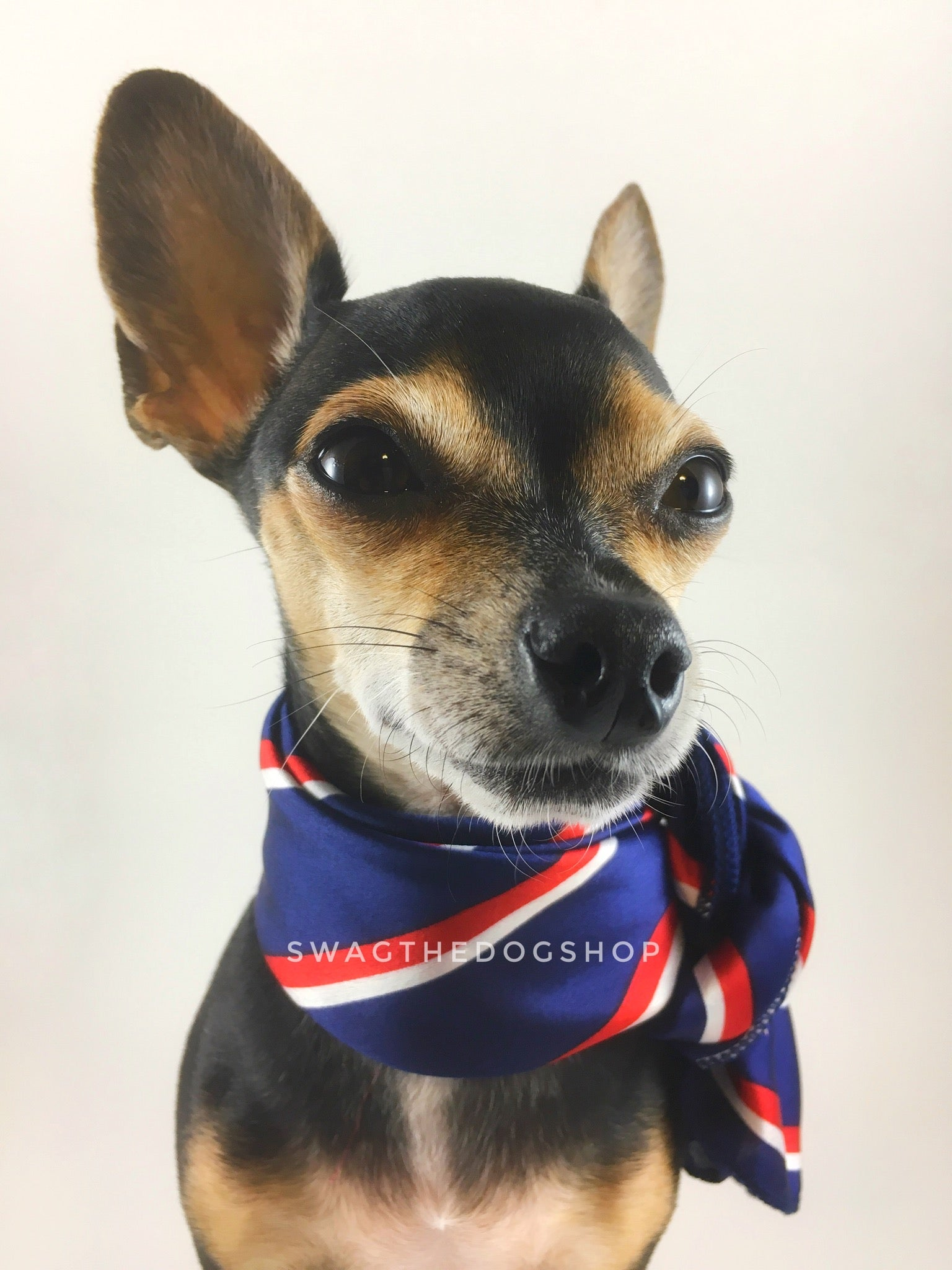 Afternoon in Paris Swagdana Scarf - Bust of Cute Chihuahua Wearing Swagdana Scarf as Neckerchief. Dog Bandana. Dog Scarf