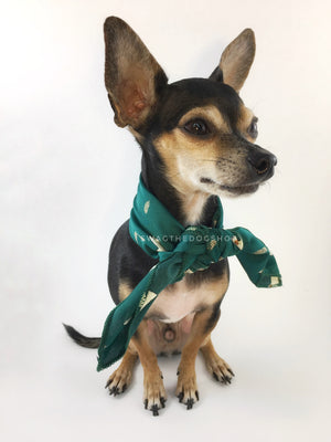 Lorenzo Llama Green Swagdana Scarf - Full Front View of Cute Chihuahua Wearing Swagdana Scarf as Neck Scarf. Dog Bandana. Dog Scarf.