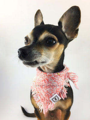 Fairy Pink Tweed Swagdana with Frayed Edges - Bust of Cute Chihuahua Wearing Swagdana. Dog Bandana. Dog Scarf