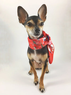 Red Wild Flowers Swagdana Scarf - Full Front View of Cute Chihuahua Wearing Swagdana Scarf as Neckerchief. Dog Bandana. Dog Scarf.