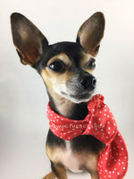 Polka Itty Bitty Coral Swagdana Scarf - Bust of Cute Chihuahua Wearing Swagdana Scarf as Neckerchief. Dog Bandana. Dog Scarf.