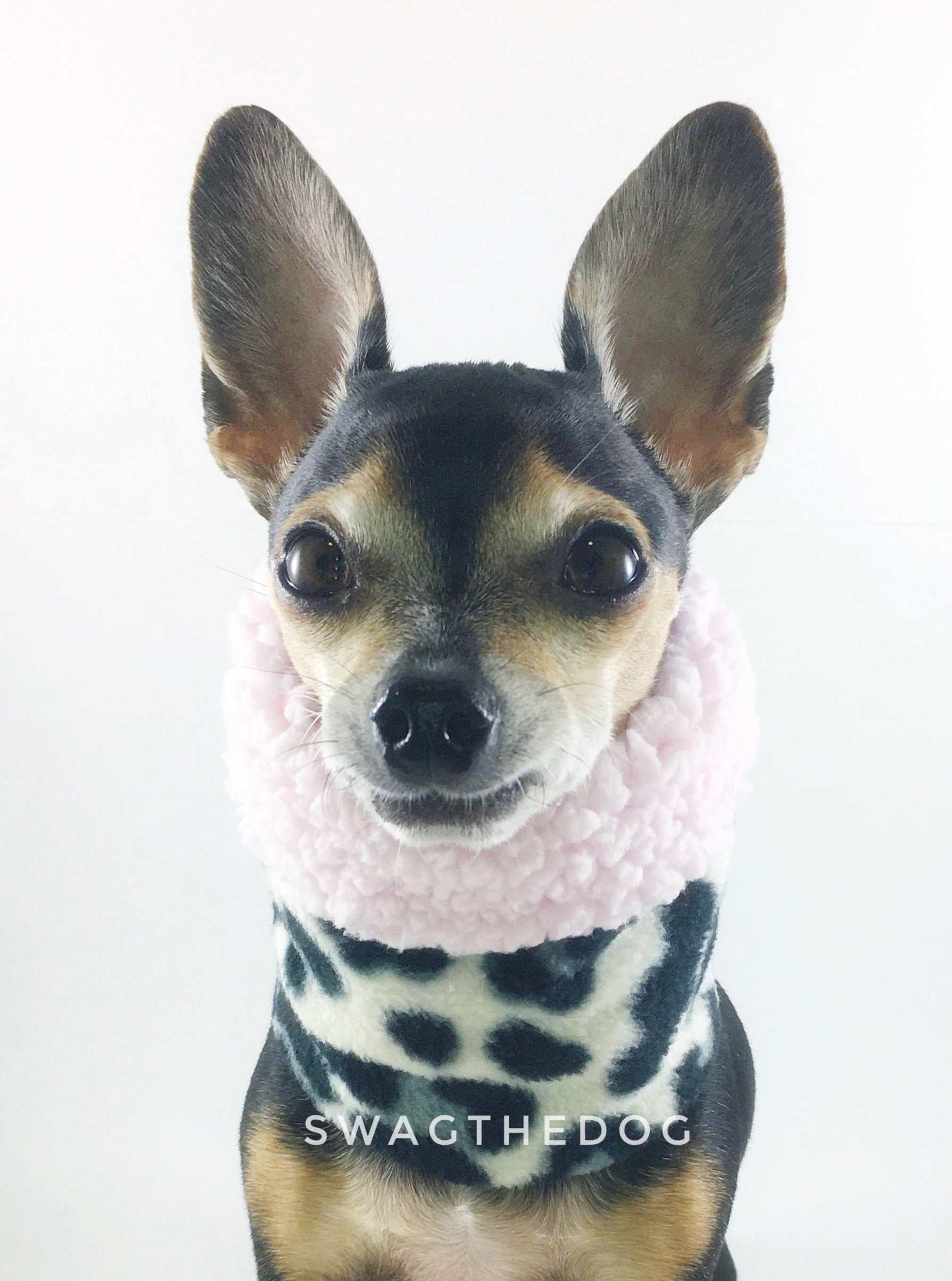 Gray Snow Leopard Swagsnood - Close-up Face View of Hugo, Cute Chihuahua Dog Wearing gray snow leopard print fleece dog snood. Pink sherpa rolled up 1/3 of the snood and 2/3 with gray snow leopard print fleece