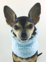 Gray Snow Leopard Swagsnood - Full Front View of Hugo, Cute Chihuahua dog sitting wearing blue sherpa side