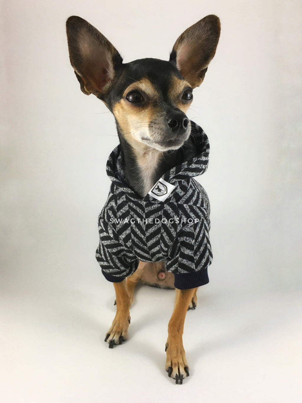 Après Ski Black Hoodie - Cute Chihuahua Dog Wearing Hoodie Full Front View. Black and Gray Herringbone Hoodie