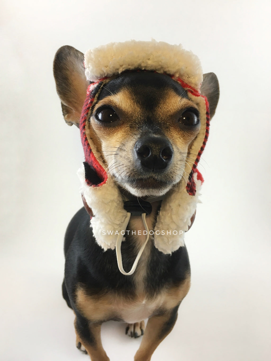 True North Aviator Hat. Front view of Hugo, black and tan Chihuahua wearing the hat. Hand-made with red plaid fleece fabric with sherpa inside, a hole for each ears, side flap with buttons on and a drawstring under the chin to adjust. The front bill is flipped back to show the sherpa fabric.