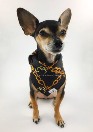 24K Black Gold Swagdana Scarf - Full Front View of Cute Chihuahua Wearing Swagdana Scarf as Bandana. Dog Bandana. Dog Scarf