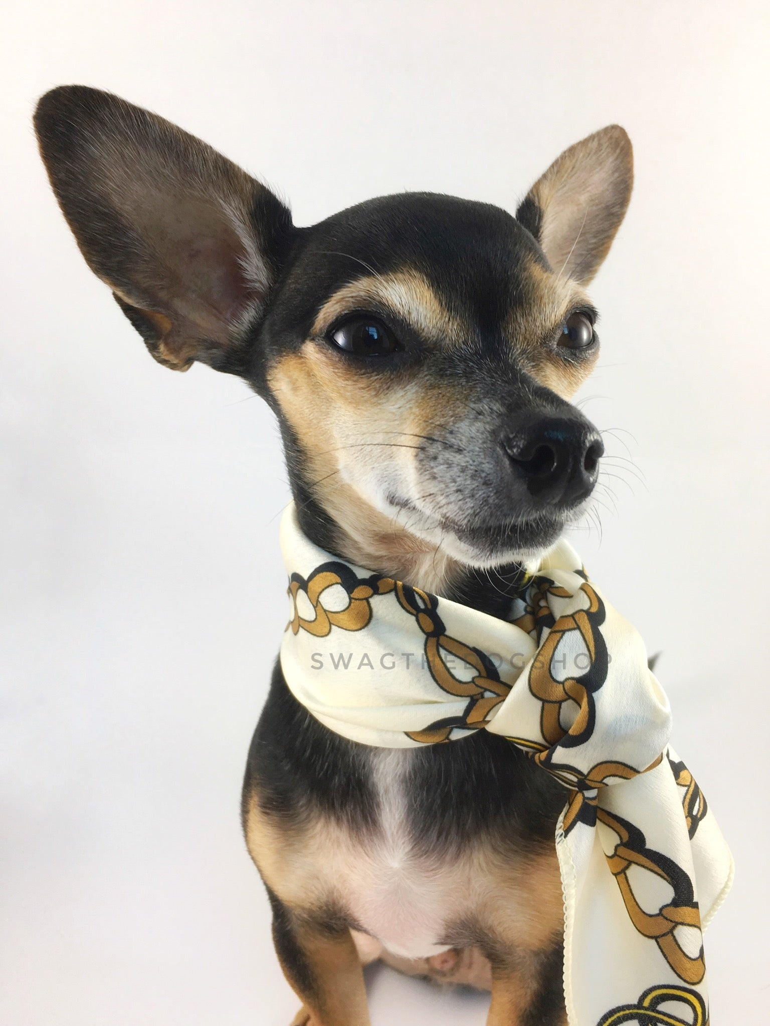 24K Vanilla Gold Swagdana Scarf - Bust of Cute Chihuahua Wearing Swagdana Scarf as Neckerchief. Dog Bandana. Dog Scarf