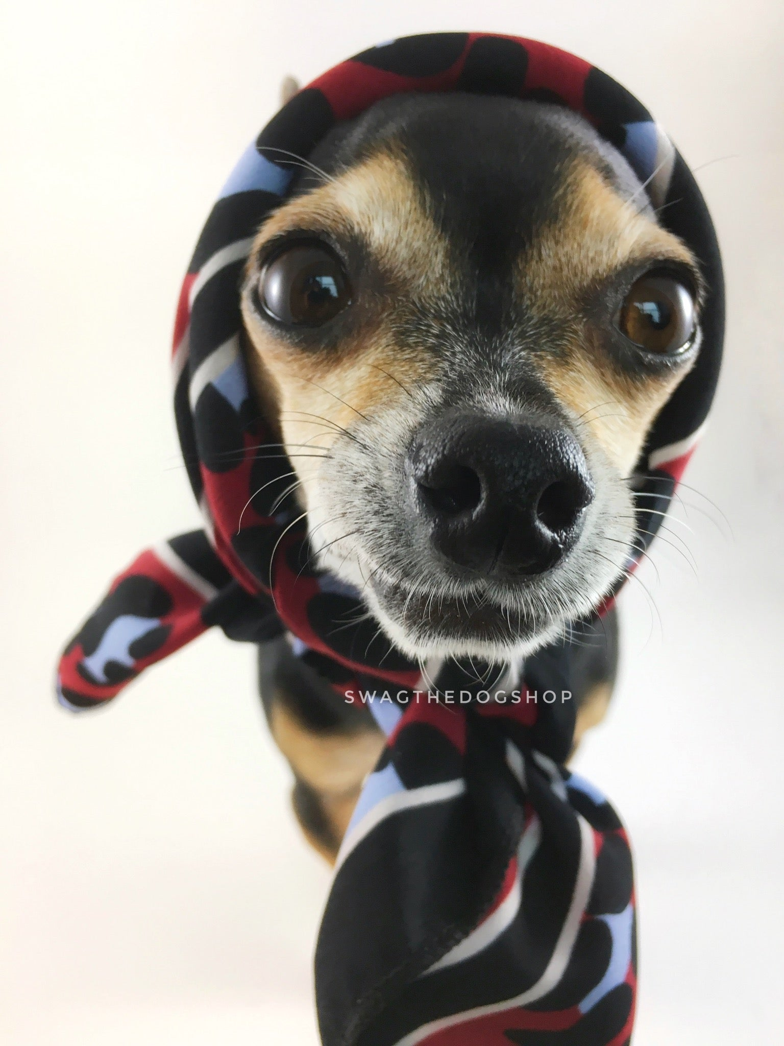 Leopard Burgundy Swagdana Scarf - Bust of Cute Chihuahua Wearing Swagdana Scarf as Headscarf. Dog Bandana. Dog Scarf.