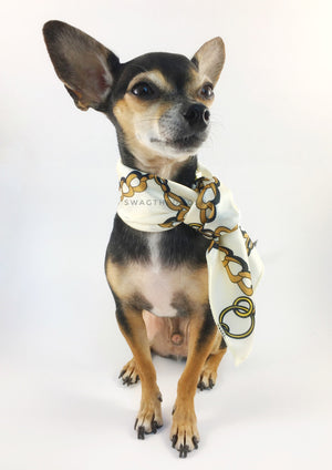 24K Vanilla Gold Swagdana Scarf - Full Front View of Cute Chihuahua Wearing Swagdana Scarf as Neckerchief. Dog Bandana. Dog Scarf
